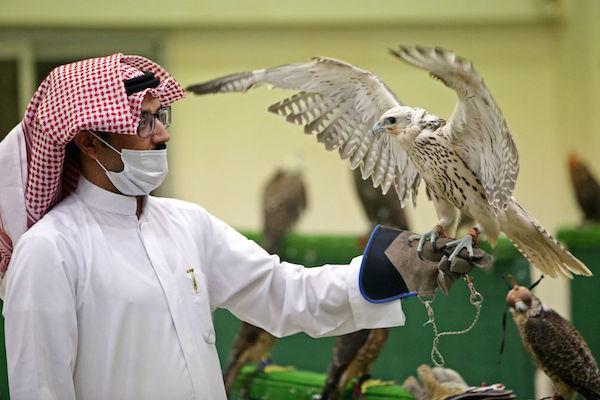 لأول-مرة-منذ-تفشي-فيروس-كورونا-مزاد-للصقور-في-الكويت-