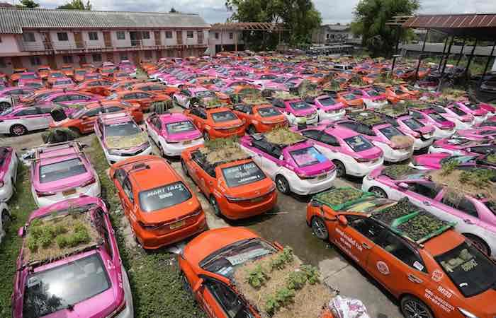 حدائق-مصغرة-على-أسطح-سيارات-الأجرة-غير-المستخدمة-في-بانكوك-بتايلاند