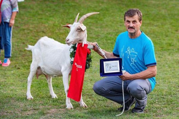 مسابقة-جمال-الماعز-في-كرواتيا