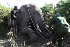 نقل أفيال إلى الحديقة الوطنية في إحدى