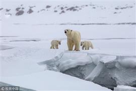 مصور في القطب الشمالي يتتبع الدببة القطب...