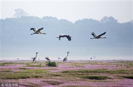 """""""جنة الطيور"""".. بحيرة بويانج للمياه العذبة"""