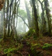 أغرب الغابات الساحرة في العالم