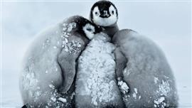 كيف تبقى الحيوانات دافئة في درجات الحرارة