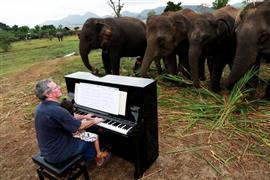 متطوع بريطاني يعزف البيانو للفيلة المرضى
