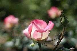 بسمات الزهور تزين حدائق العالم