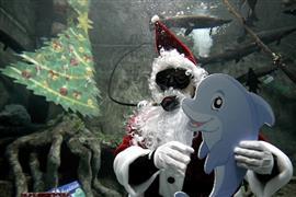 """""""بابا نويل"""" يظهر وسط أسماك متحف الأحياء"""
