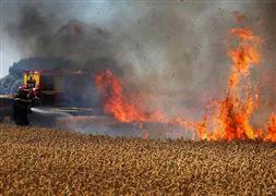 حريق حقول القمح فى فرنسا