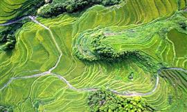 صور مذهلة لمدرجات حقول الأرز الجميلة