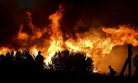 تجدد حرائق الغابات في ولاية كاليفورنيا