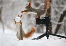حيوانات تلعب بعد تساقط الثلوج