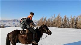 الاعتماد على الخيول في التوصيل بسبب