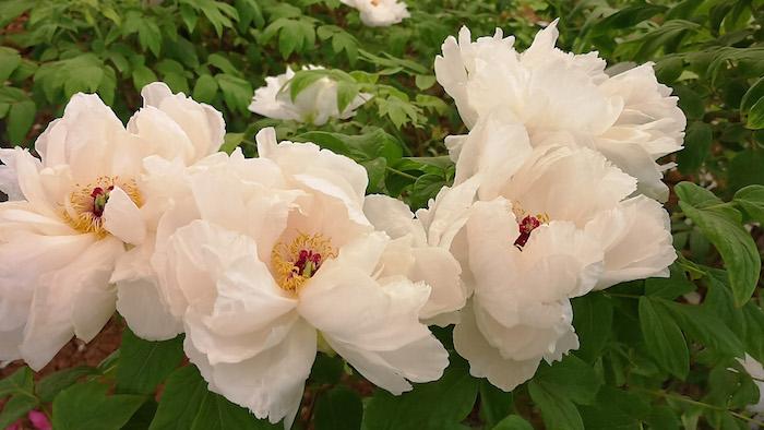 الزهور الملونة تزدهر بأناقة في الربيع