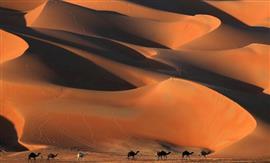 إنطلاق مهرجان ليوا الدولي في أبوظبي