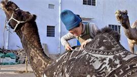 مصففة شعر يابانية تصنع لوحات فنية علي أجساد الجِمال في مهرجان بيكانير الهندي للجِمال