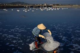 موسم حصاد حقول الملح في جنوب فيتنام