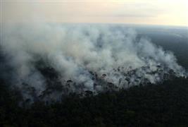 حرق جزء من غابة الأمازون أثناء تطهيرها من قِبل المزارعين في ريو باردو بالبرازيل