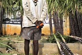 مهرجان حصاد قصب السكر فى الهند
