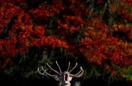 الخريف يجتاح العالم بألوانه المميزة