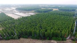 حديقة الأراضي الرطبة ببحيرة لويانغ في يانغتشو الصين