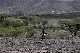 أسراب الجراد تغزو كينيا
