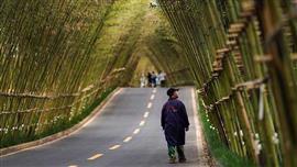 غابة الخيزران الكثيفة غرب الصين