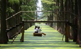غابة المياه في الصين