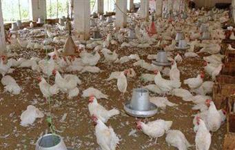 محافظ الغربية يوافق على الغلق الإداري لـ 11 مزرعة دواجن لمدة 3 أشهر