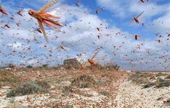 الصومال تعلن حالة الطوارئ بسبب غزو الجراد.. وتطالب بدعم مالي