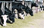 طرح أكبر مجمع  للثروة الحيوانية والداجنة بالغردقة خلال المؤتمر الاقتصادي