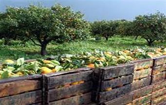"""""""أبوستيت"""": ارتفاع صادرات مصر الزراعية خلال العام الحالى إلى 4 ملايين و976 ألف طن"""