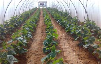 افتتاح المعرض الأول للصوب الزراعية بمركز العدوة بالمنيا