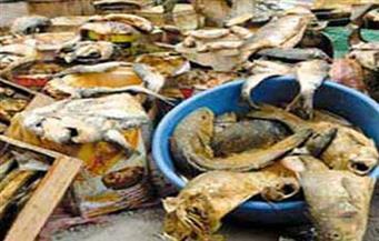 مع قرب احتفالات شم النسيم.. ضبط 372 كيلو أسماك مملحة ومدخنة فاسدة في حملة بالإسكندرية