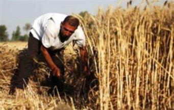 """""""زراعة الغربية"""": تفعيل خطط """"إرشادية"""" للنهوض بالمحاصيل الإستراتيجية ورفع الإنتاجية"""