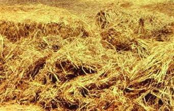 البيئة: تحويل 5 آلاف طن قش أرز إلى سماد عضوي بالغربية وكفرالشيخ