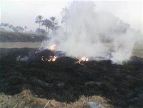 الأقمارالصناعية تُسجل 439 مخالفة حرق قش الأرز بالغربية وكفرالشيخ