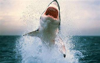 ننشر تفاصيل حادث هجوم القرش على فوج سياحي بجنوب سيناء