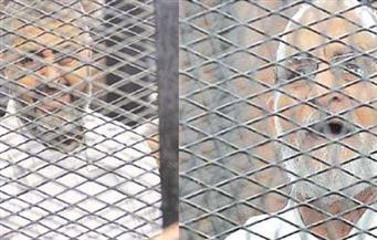 """""""جنايات القاهرة"""" تنظر اليوم محاكمة بديع والشاطر وآخرين فى قضية """"أحداث مكتب الإرشاد"""""""