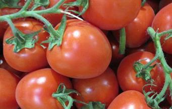 """""""بوابة الأهرام"""" تكشف أسباب """"جنون"""" أسعار الطماطم في الأسواق"""