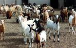 محافظ أسيوط يدعم مشروع تنمية الثروة الحيوانية بمبلغ 25 مليون جنيه
