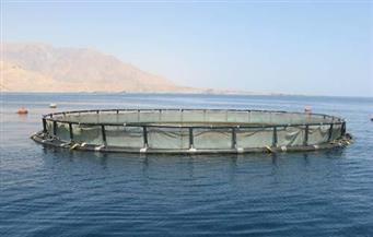 ضبط صاحب مزرعة سمكية يستخدم لحوم الحمير والحيوانات النافقة لتغذية الأسماك بالإسكندرية
