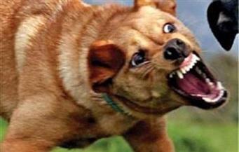 إصابة 10 بجروح بسبب عقر كلب مسعور لهم في أبوتيج