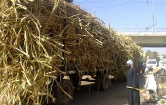 نائب: الحكومة وافقت على زيادة طن القصب إلى 620 جنيهًا.. ولجنة الزراعة تطالب بـ 700