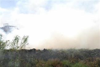 """""""البيئة"""" تحرر 1563 مخالفة لحرق قش الأرز بمحافظة الغربية"""
