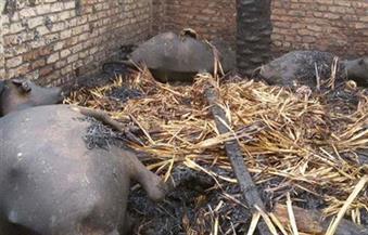نفوق 17 رأس ماشية وأغنام جراء حريق بقرية الشيخ عواجة في سوهاج