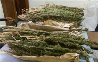 ضبط 350 كيلو بانجو مع تاجرى مخدرات داخل فلوكة بالمجرى الملاحى لقناة السويس