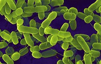 """وداعا للبكتيريا والجراثيم.. العلماء يبتكرون مضادا حيويا من""""سم الدبابير"""""""