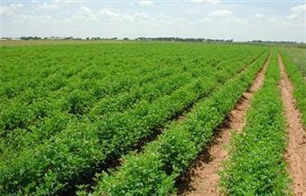 انتقادات لخلو قانون الاستثمار الجديد من باب للاستثمار الزراعي.. ومراهنة على اللائحة التنفيذية