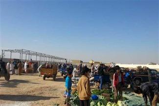 """رئيس مدينة """"دراو"""" ينفي تعطيل سوق المواشي بسب انتشار الحمى القلاعية"""