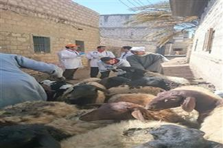 جامعة بنها تنظم قافلة بيطرية لعلاج الماشية والدواجن بطوخ مجانا